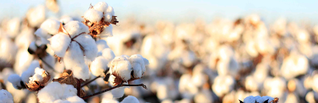 cotton-production